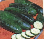 Cucumbers - Slicing - Organic